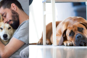 Si ta kuptoni që qeni juaj po vuan ose po kalon një periudhë depresioni