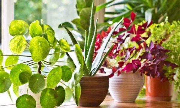 Largoni ajrin e papastër nga shtëpia me mënyra natyrale