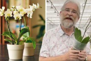 Orkidea: Si ta kuptoni që bima ka nevojë për ujitje