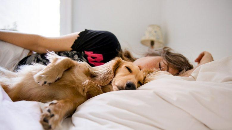 Studimi i ri tregon se njerëzit me të vërtetë do të flenë më përpara pranë qenve sesa partnerëve të tyre